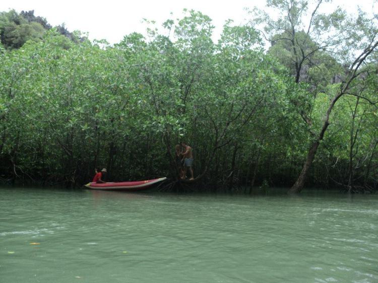 Hutan paya bakau - close encounter. Hehe