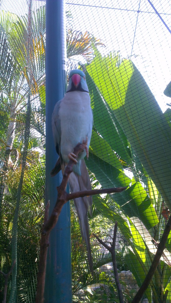 Enter the park, and you will be greeted by a lot of birds, including this bird.