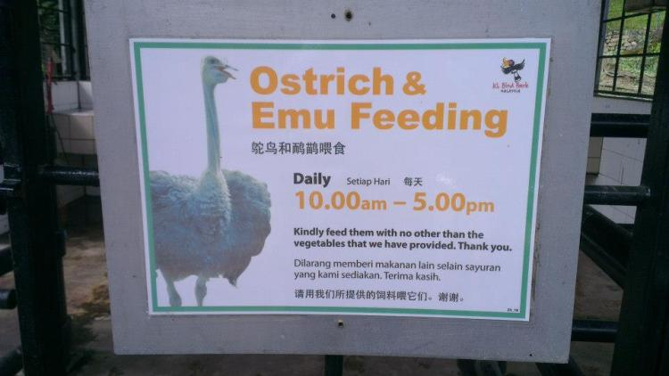 Feed the big birds for free!