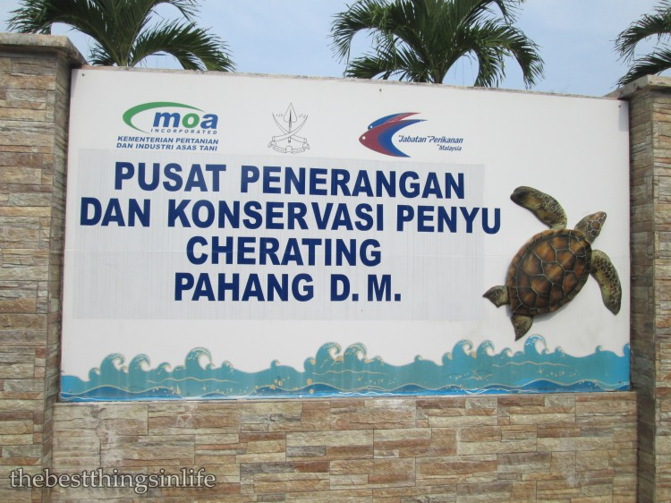 The Turtle Sanctuary and Information Centre, Cherating, Malaysia